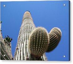 Saguaro 2 Acrylic Print by Travis Wilson