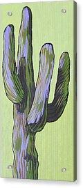 Saguaro 5 Acrylic Print