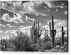 Acrylic Print featuring the photograph Saguaro And Blue Skies Ahead In Black And White  by Saija Lehtonen