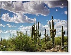 Acrylic Print featuring the photograph Saguaro And Blue Skies Ahead  by Saija Lehtonen