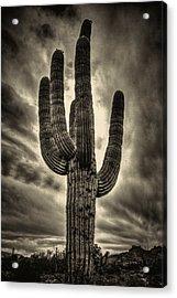 Saguaro And Storm Clouds Acrylic Print