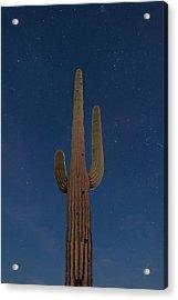 Saguaro At Night Acrylic Print by Steve Gadomski