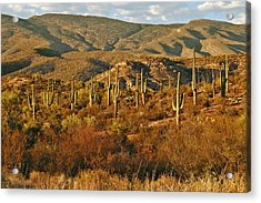 Saguaro Cactus - A Very Unusual Looking Tree Of The Desert Acrylic Print by Christine Till