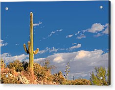 Saguaro Cactus - Symbol Of The American West Acrylic Print by Christine Till