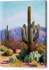 Saguaro Acrylic Print by Candy Mayer