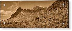 Saguaro Hillsides Tint  Acrylic Print