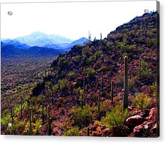 Acrylic Print featuring the photograph Saguaro National Park Winter 2010 by Michelle Dallocchio