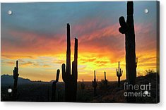 Acrylic Print featuring the photograph Saguaro Sunset by Anthony Citro