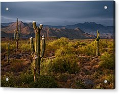 Saguaro Sunset At Four Peaks Arizona Acrylic Print