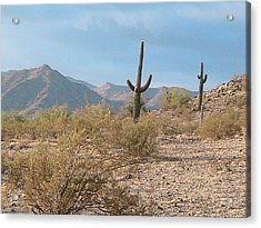 Saguaros On A Hillside Acrylic Print