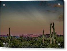 Saguaros Salute Rays Rising Acrylic Print