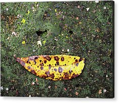 Acrylic Print featuring the photograph Sail Away by Tom Druin