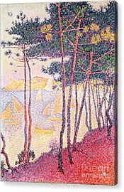 Sailing Boats And Pine Trees Acrylic Print by Paul Signac