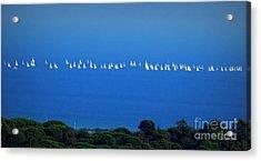 Sailing The Sea And Sky Acrylic Print