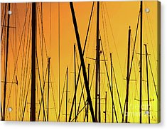 Sailing Trees In The Port At Sunset  Acrylic Print