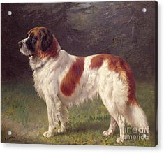 Saint Bernard Acrylic Print by Heinrich Sperling