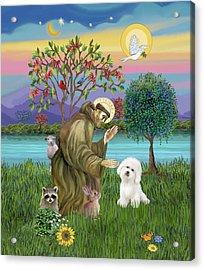 Saint Francis Blesses A Bichon Frise Acrylic Print