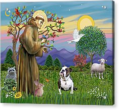 Saint Francis Blesses A Brown And White English Bulldog Acrylic Print