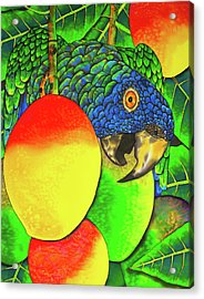 Saint Lucia Parrot With Mangos Acrylic Print