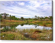 Saint Lucie Nature II Acrylic Print by Liesl Marelli