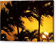 Saint Martin Sunset Through The Palm Trees Acrylic Print