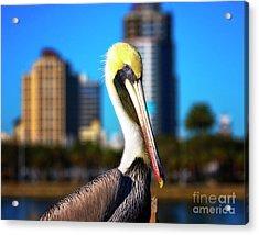 Saint Petersburg Pelican Acrylic Print