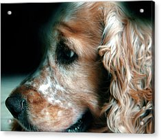 Saint Shaggy Art Photograph  13 Acrylic Print
