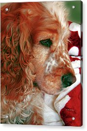 Saint Shaggy Art Photograph  14 Acrylic Print