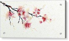 Sakura Branch Acrylic Print