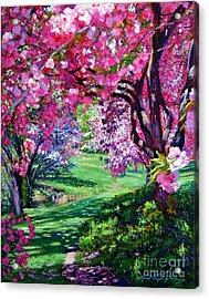 Sakura Romance Acrylic Print