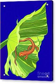 Salamander Acrylic Print by Lucyna A M Green
