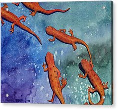 Salamanders Acrylic Print