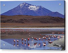 Salar De Uyuni Tour 39 Acrylic Print by Skip Hunt