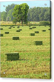 Acrylic Print featuring the photograph Salem Hay Field by David King