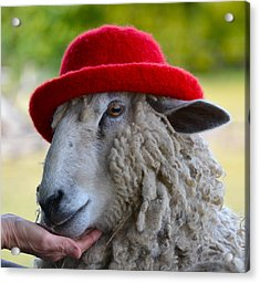 Sally The Sheep Acrylic Print