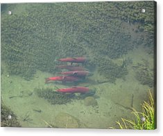 Acrylic Print featuring the photograph Salmon by Adam Owen