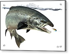 Salmon Acrylic Print by Anders Ovesen