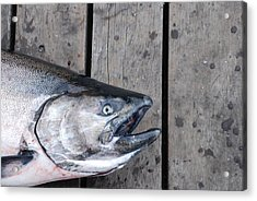 Salmon On Deck Acrylic Print