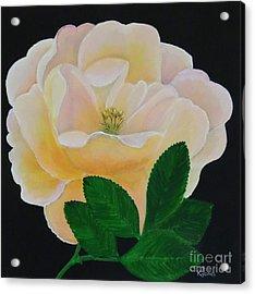 Salmon Pink Rose Acrylic Print