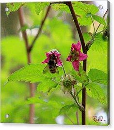 Salmonberry Honey Acrylic Print