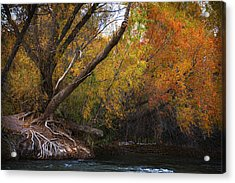 Salt River Under Brilliant Fall Colors Acrylic Print