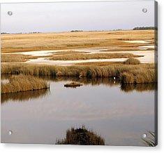 Saltwater Marsh Acrylic Print by Marty Koch