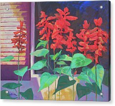 Salvia In The Windowbox Acrylic Print by Carol Strickland