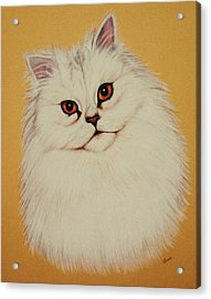 Sam - Persian Cat Acrylic Print by Lucy Deane
