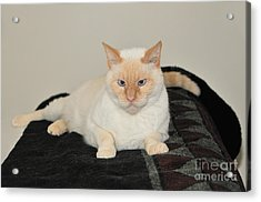 Acrylic Print featuring the photograph Sam I Am by Debbie Stahre