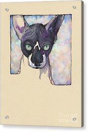 Sam The Sphynx Acrylic Print