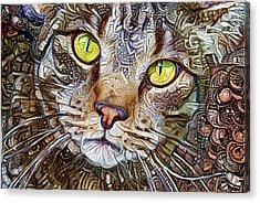 Sam The Tabby Cat Acrylic Print