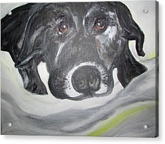 Sweet Sami Black Lab Acrylic Print