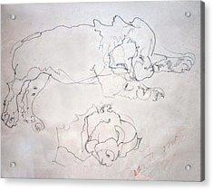 Sammy As A Pup Acrylic Print by Joan  Jones
