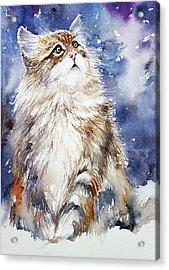 Sammy On Snow Acrylic Print